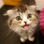 猫飼いメタルミュージシャンの情報求む。