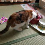 【猫】小春動画まとめ